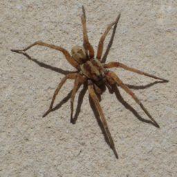Уничтожение пауков в Шадринске